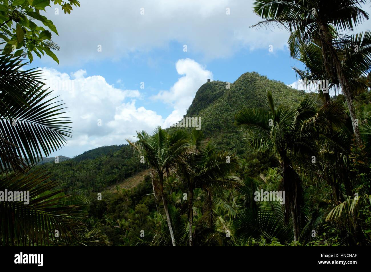 Vue depuis un sentier de la Forêt Nationale des Caraïbes El Yunque Puerto Rico Photo Stock