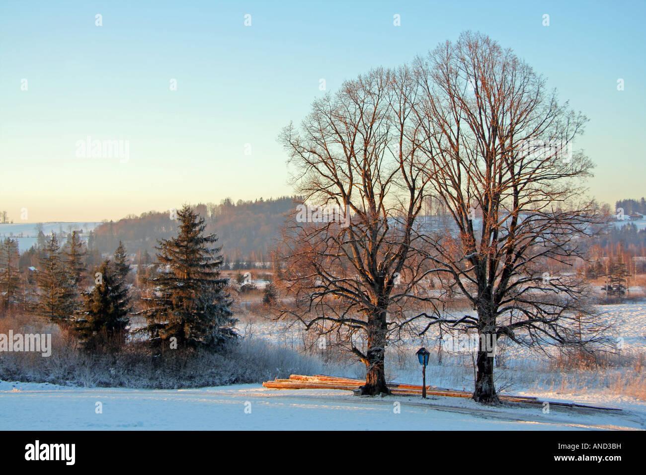 Crépuscule sur une froide journée d'hiver chemin le long de la route et les journaux entre Bad Toelz Lenggries Bavaria Banque D'Images