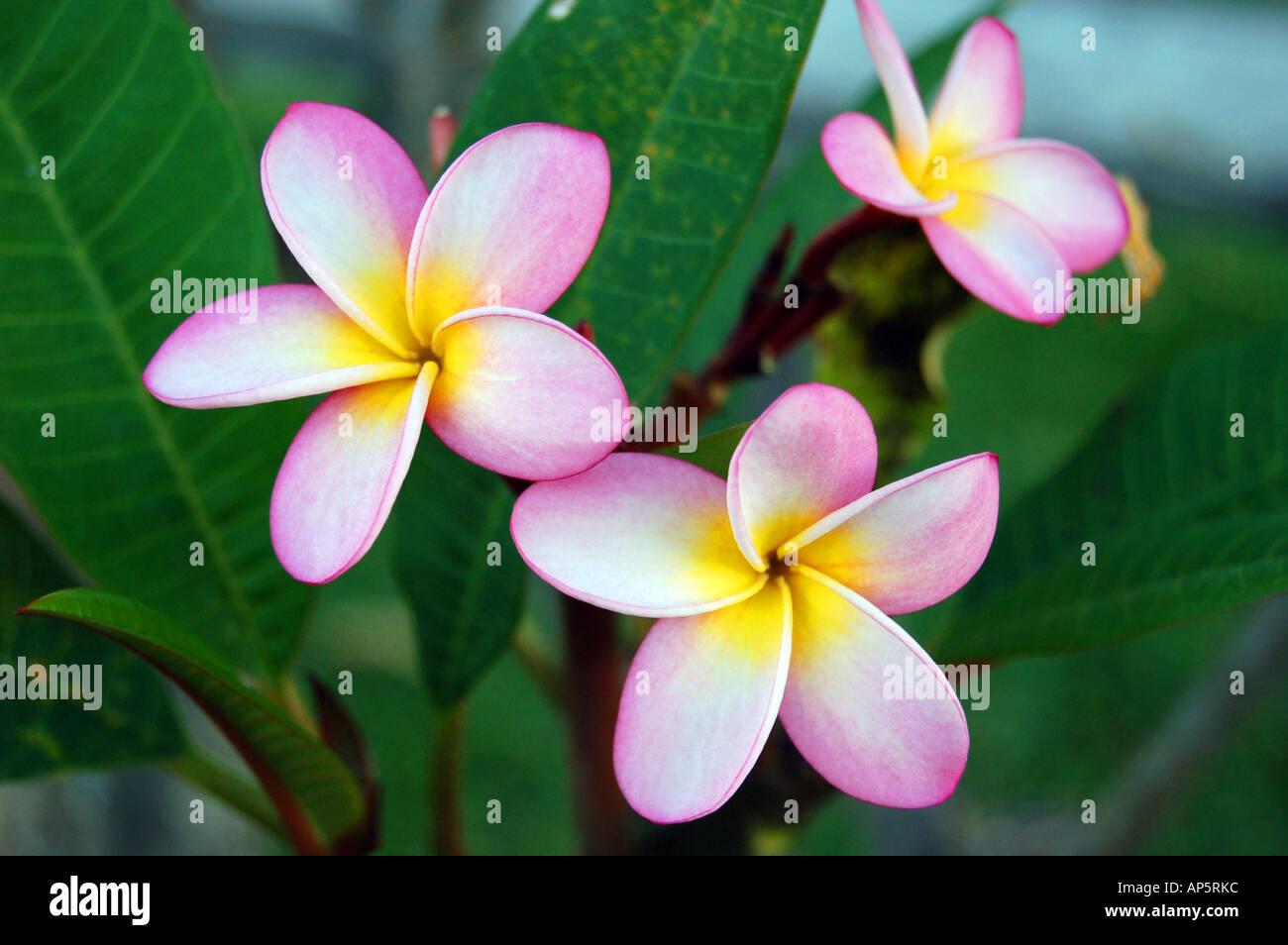 Soleil Fleur Arbre Dans Un Jardin De L Hotel L Ile Maurice Banque D
