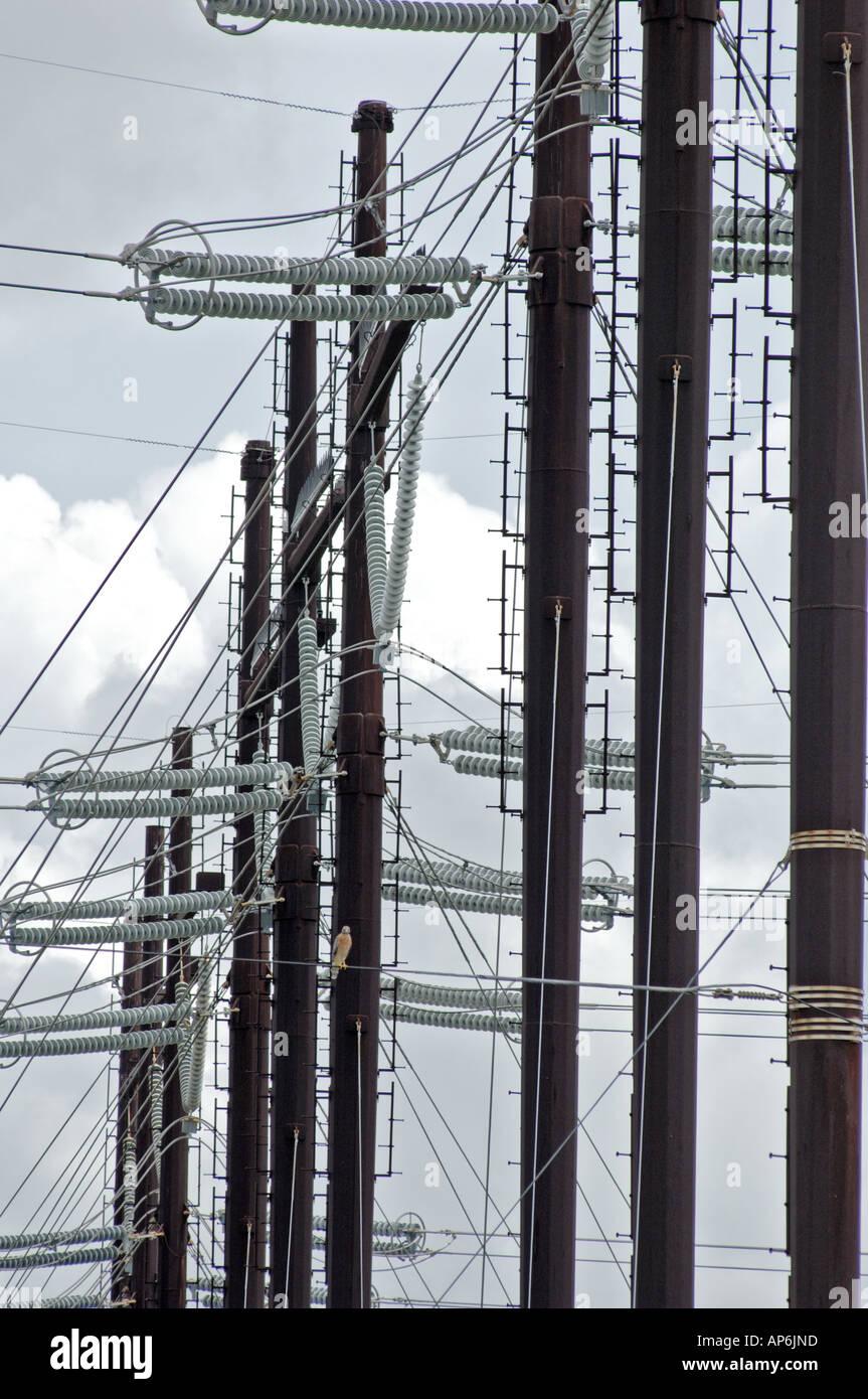 La structure de support de transmission de l'électricité les lignes électriques de l'énergie Photo Stock