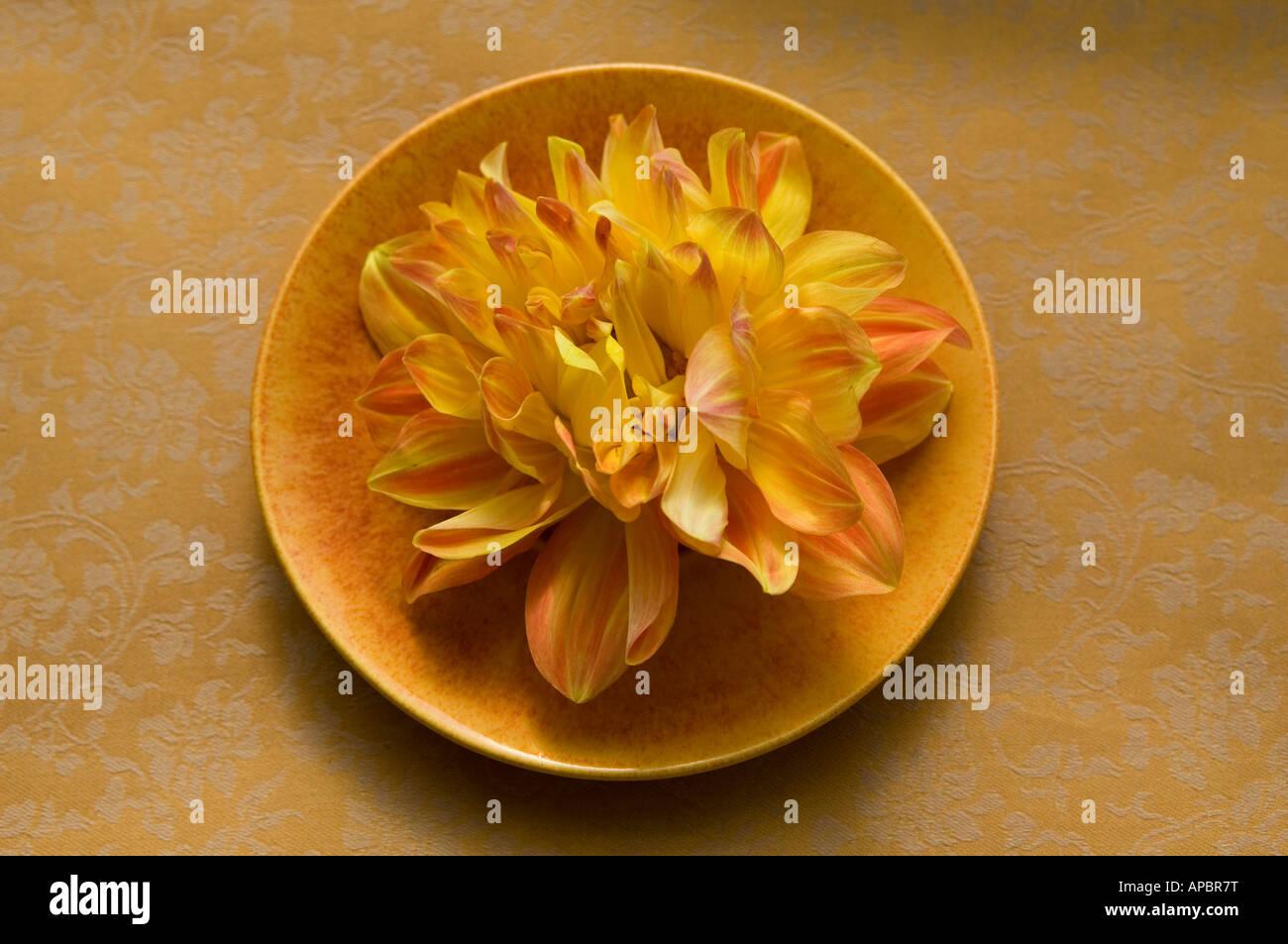 Dahlia fleurs jaune plaque sur la vie toujours jaune orange cercle rond simple Photo Stock