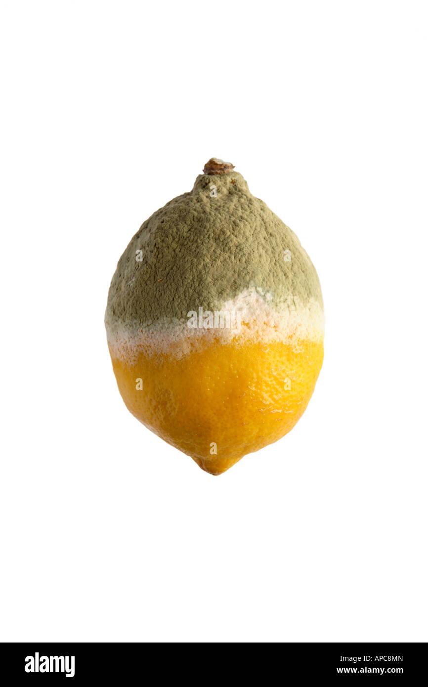 La moitié d'un citron pourri couvert de moule Photo Stock