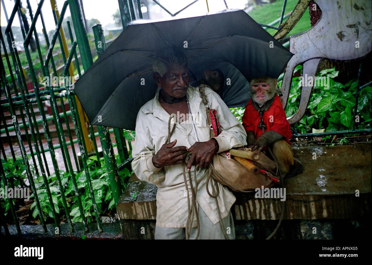 Inde MUMBAI BOMBAY HOMME AVEC DES SINGES DANS LES pluies de mousson Photo Stock