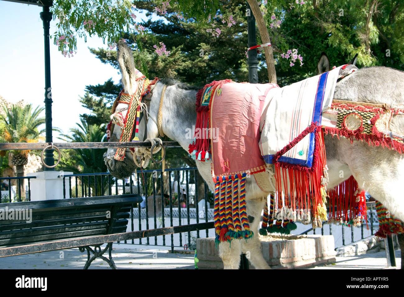 Ane Baudet Âne attaché en attente taxi âne âne baudet domestique animal