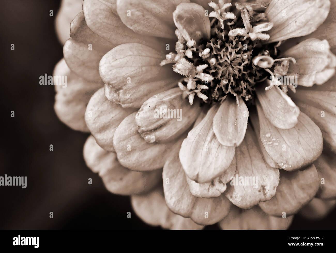 D'une fleur monochrome. Banque D'Images