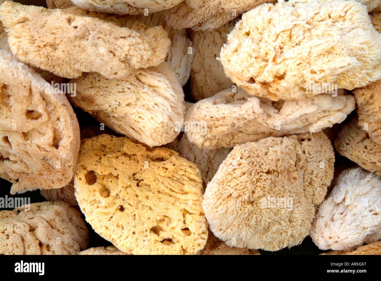 Éponge naturelle sel marin l'eau plongée recueillir marché hebdomadaire semaine bazar boutique commerce de détail du marché vendre exfolier décoratif Banque D'Images