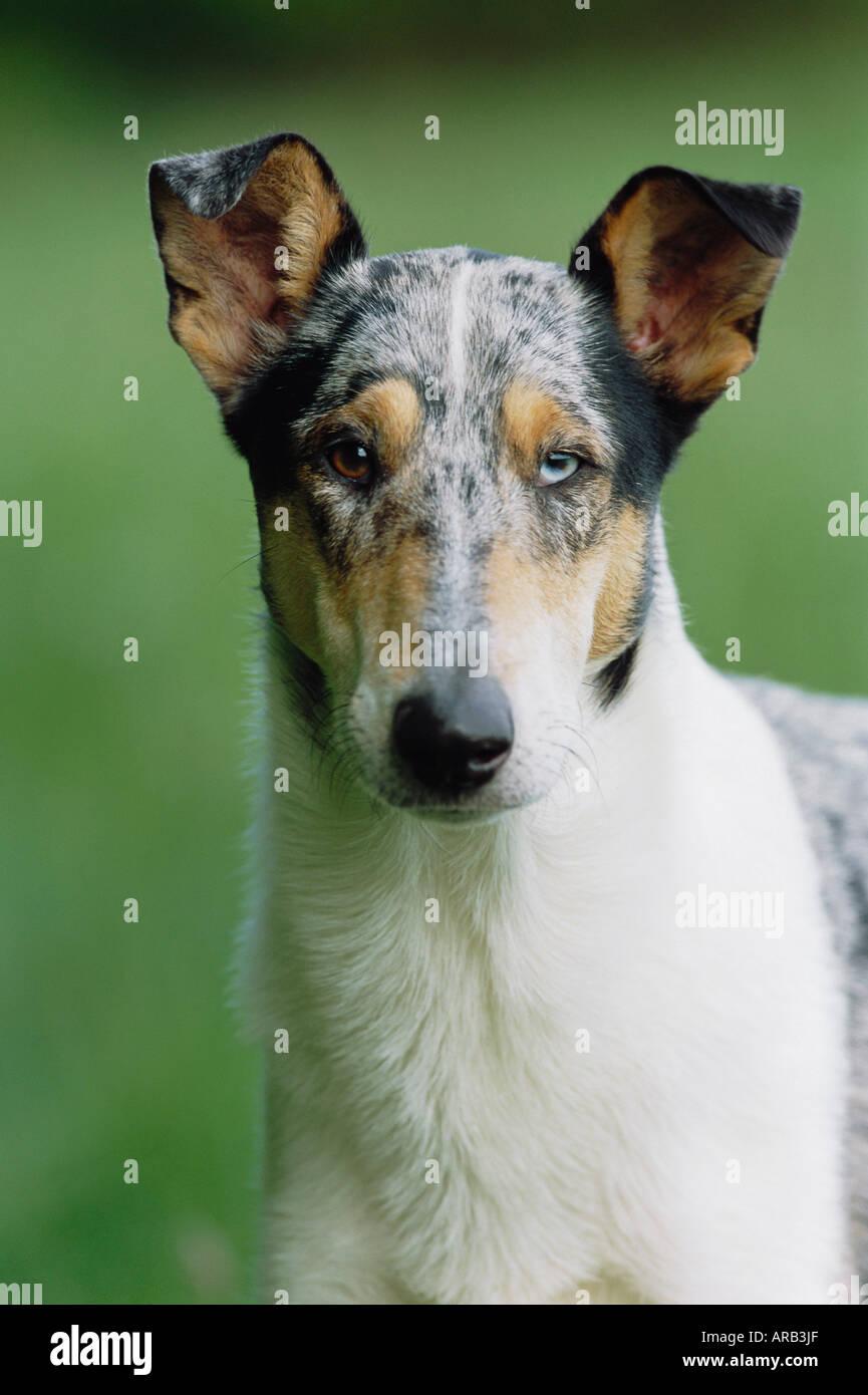 Portrait de chien Banque D'Images