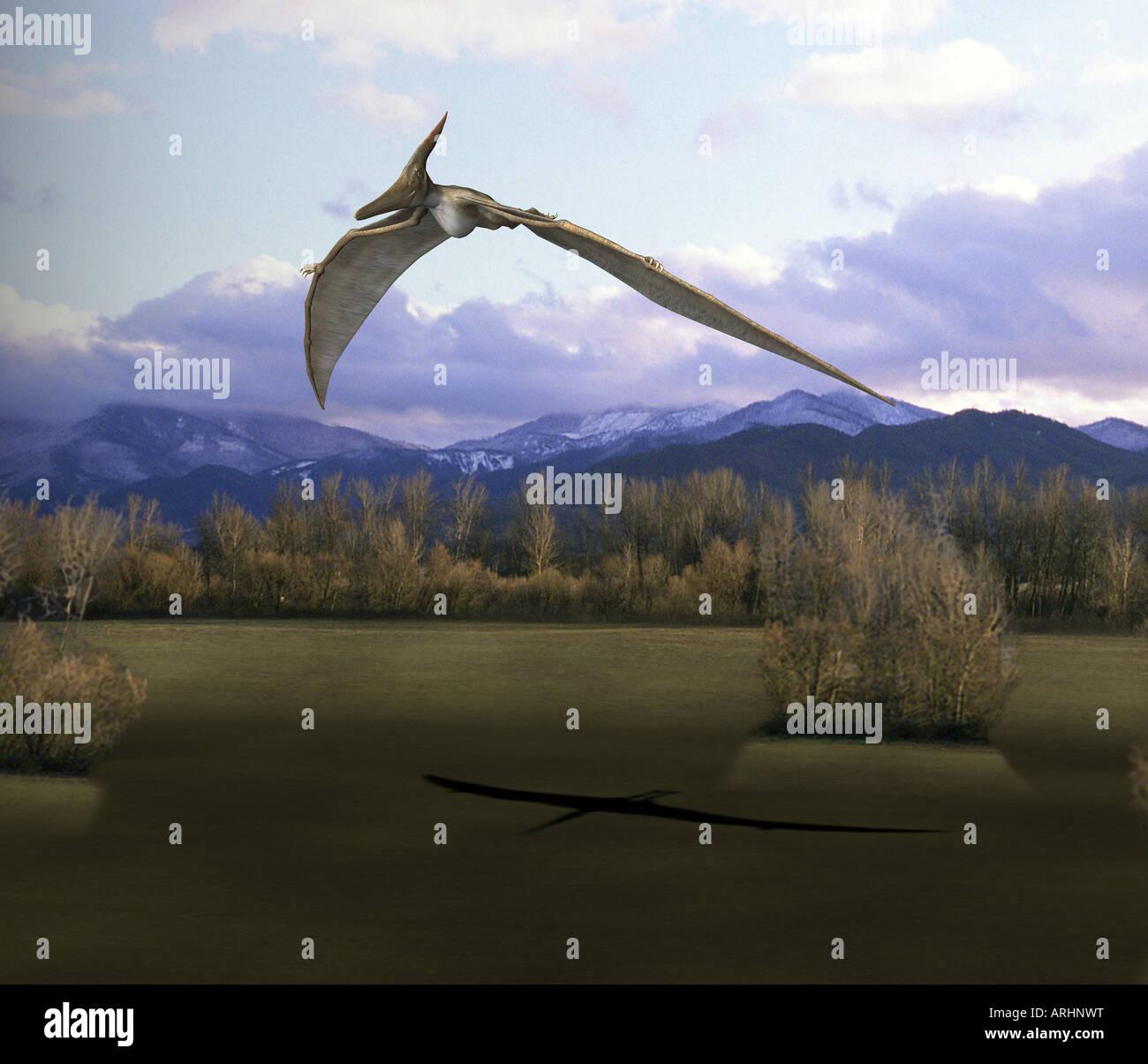 Dinosaure Pteranodon Banque D'Images