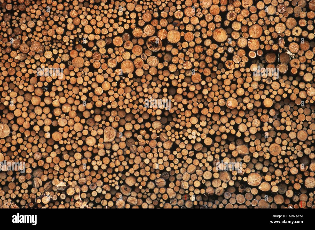 Bois empilé en cour de traitement, en Colombie-Britannique, Canada. Photo Stock