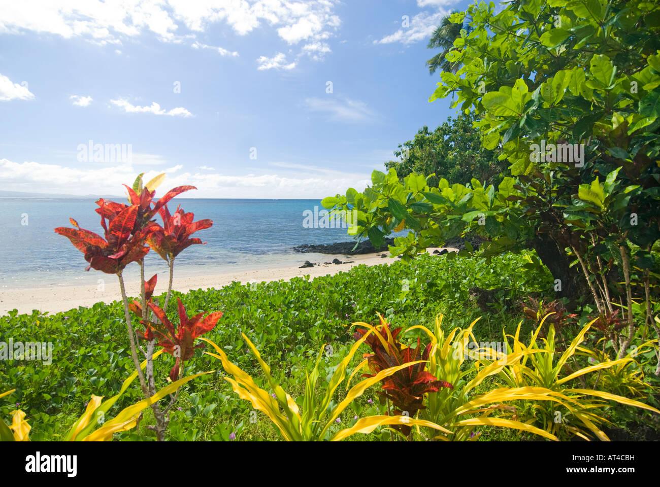 Îles Samoa UPOLU Polynésie française l'île de Manono sereine avec aucun véhicule ou chiens acceptés Plage fleur Banque D'Images