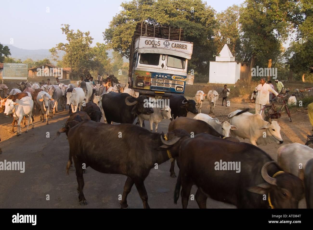 Les vaches sur une route en Inde Photo Stock