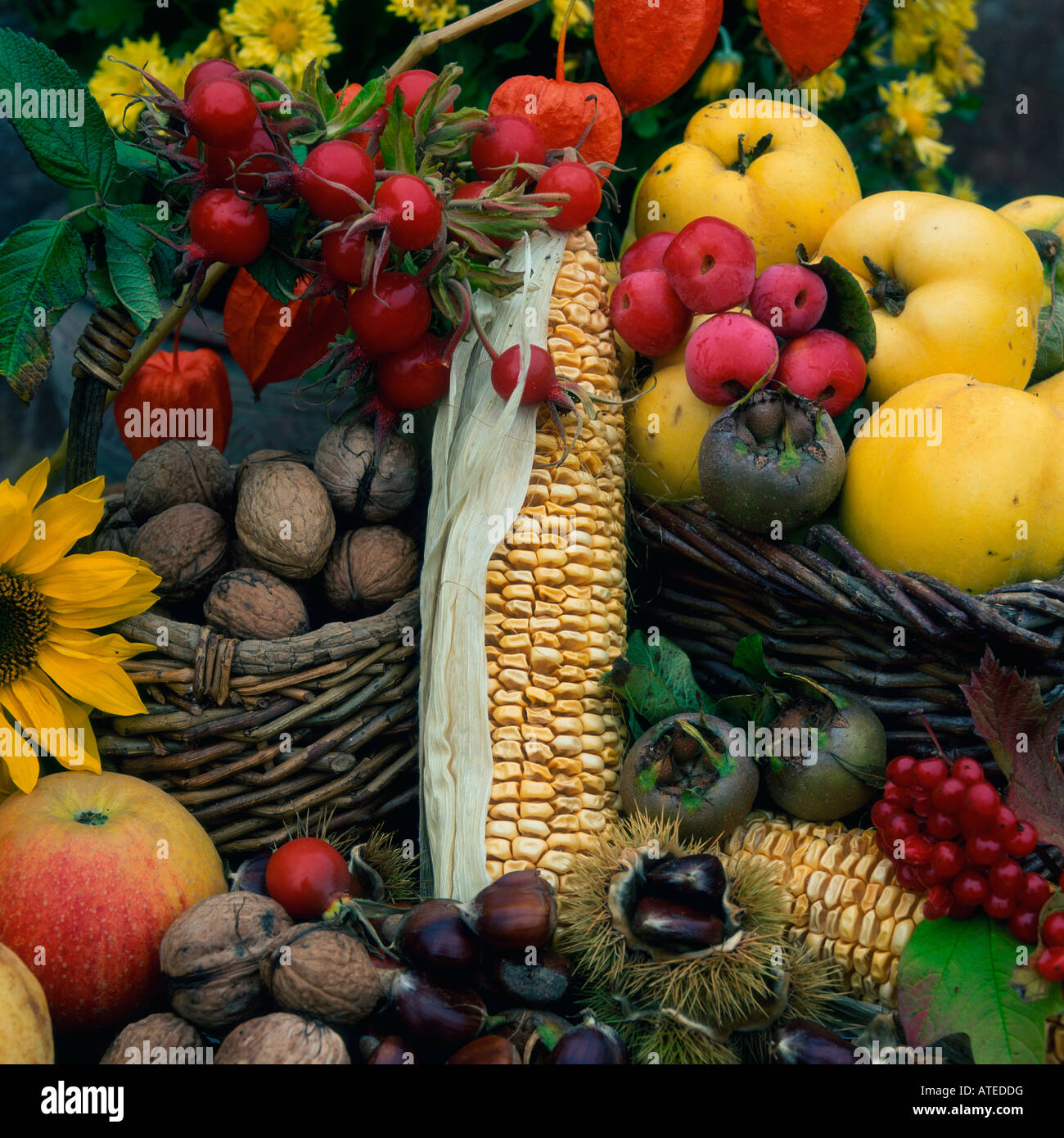 La vie encore la récolte Photo Stock