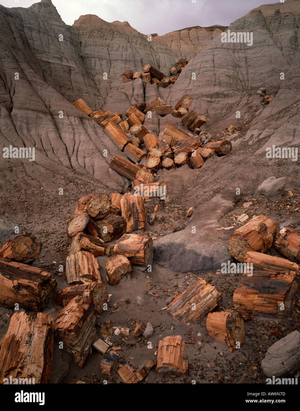 Journaux fossilisés au petrified wood National Monument, Arizona USA Photo Stock