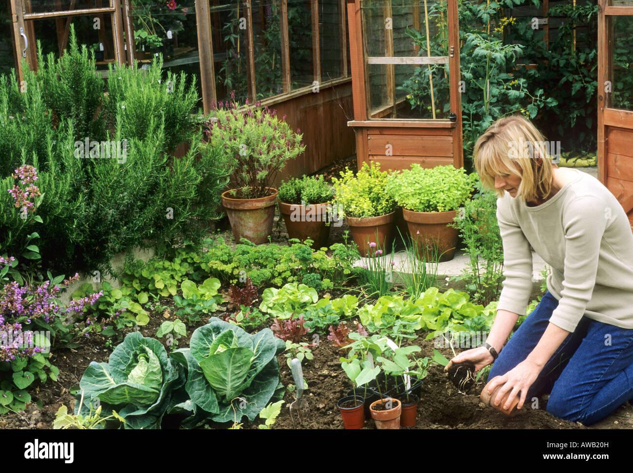 La plantation des semis de haricots verts femme serre jardin ...
