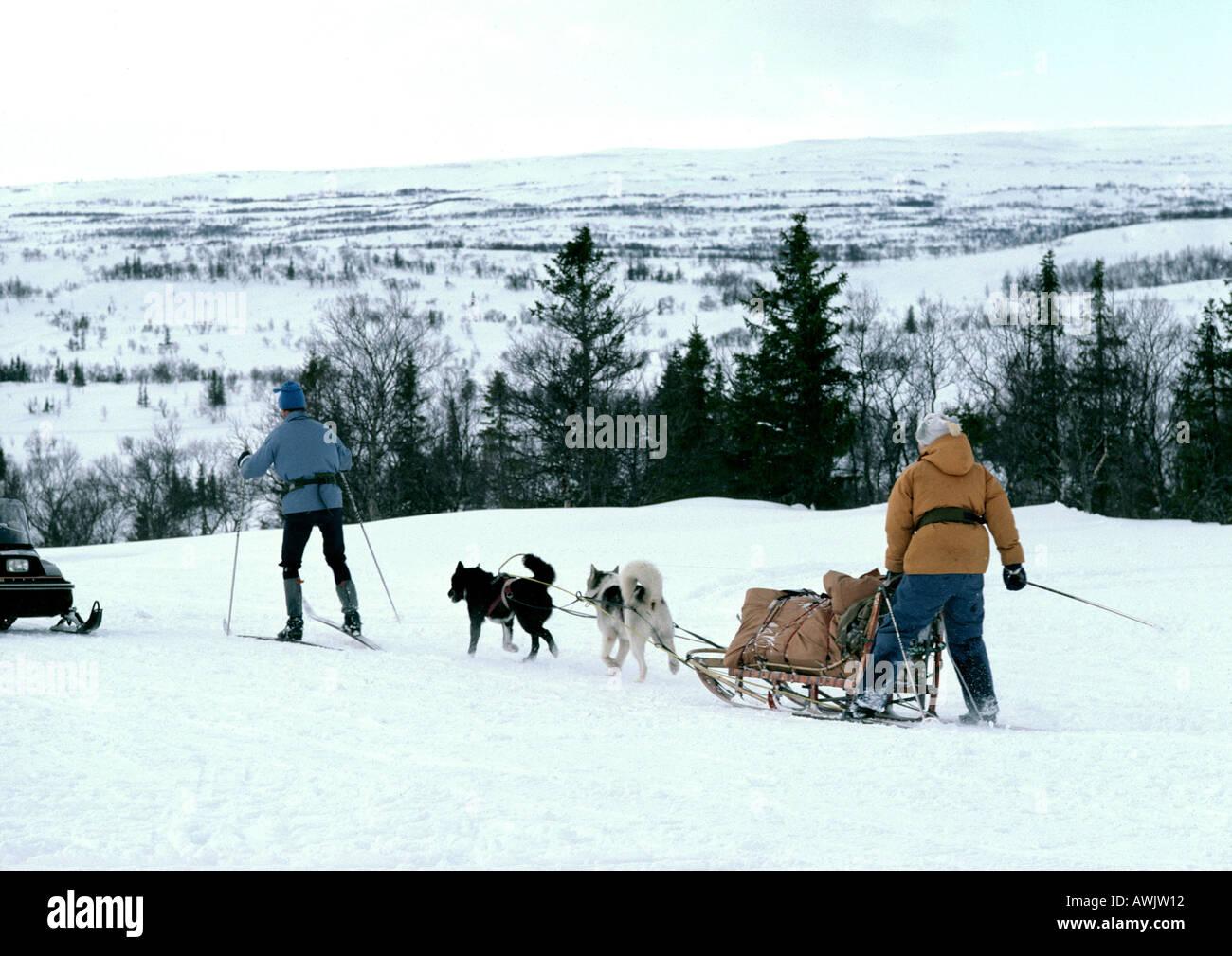 En Suède, les chiens de traîneau Traîneau tirant sur les gens et skis de fond dans la neige Banque D'Images