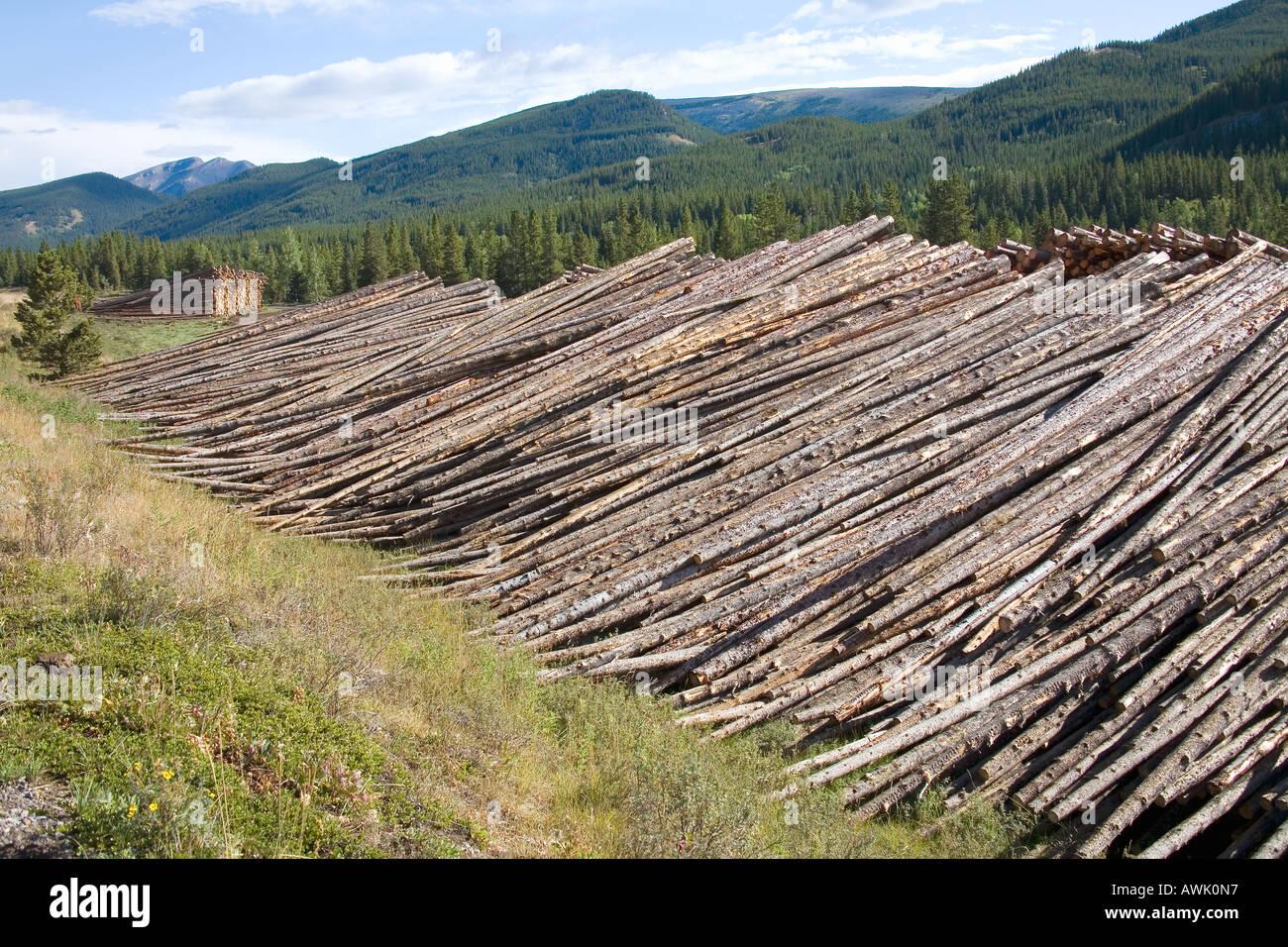Des kilomètres de forêt - arbres abattus dans l'exploitation forestière commerciale Livingstone valley Rocheuses Alberta Canada Photo Stock