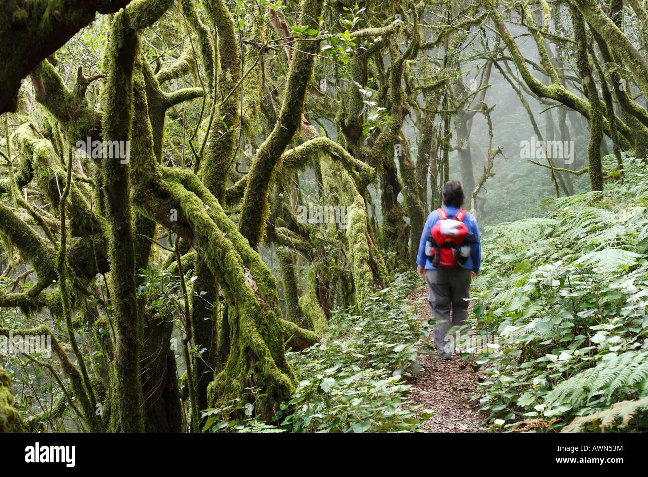 Femme de la randonnée à travers le Parc National de Garajonay, Laurel, la forêt laurisilva, La Gomera, Photo Stock