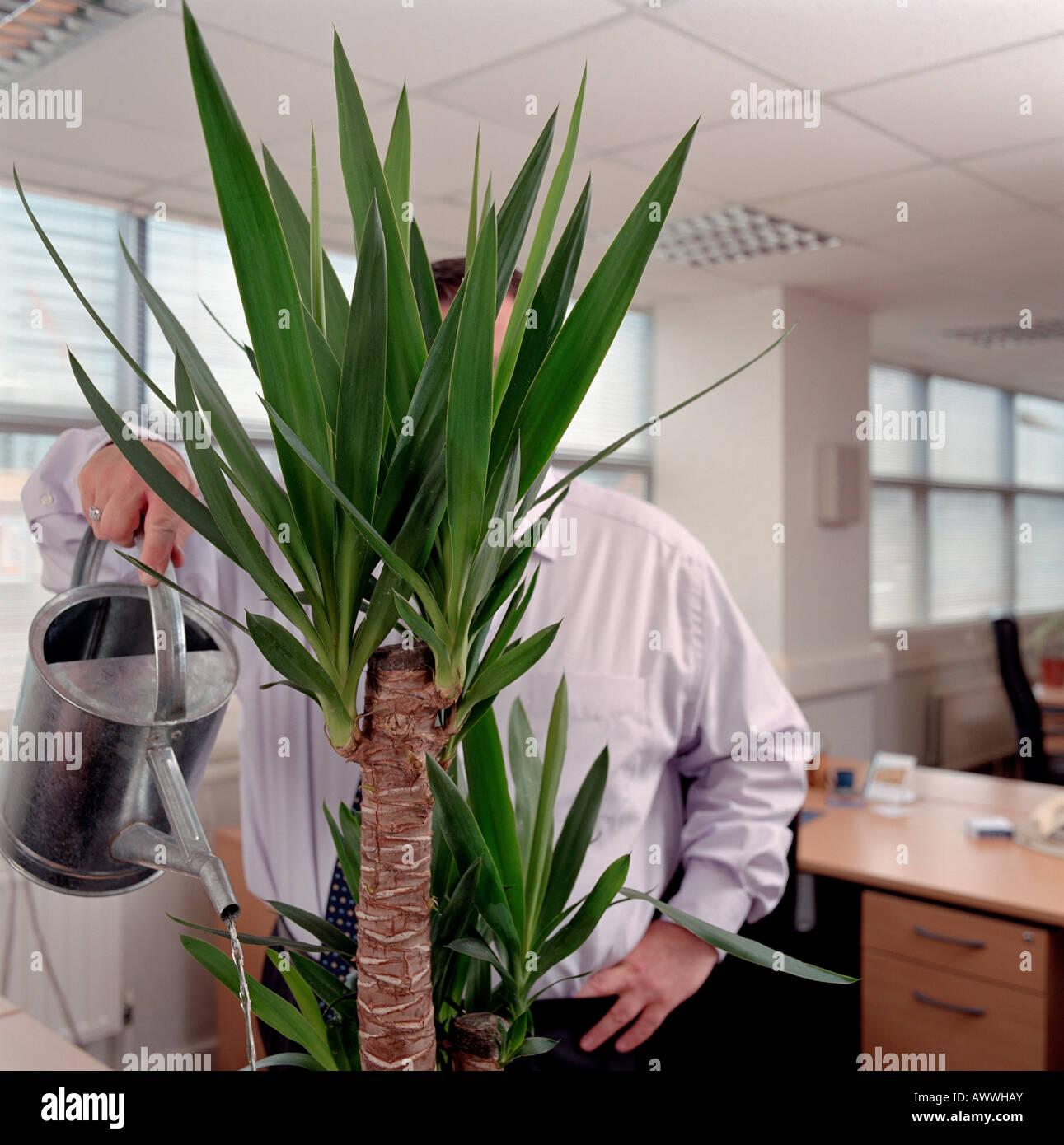 un homme d'arroser une plante en pot banque d'images, photo stock