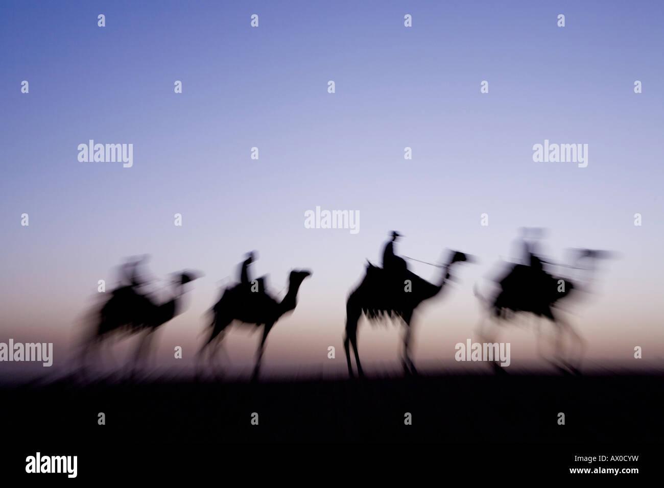 Les chameaux près des pyramides de Gizeh, Le Caire, Egypte Banque D'Images