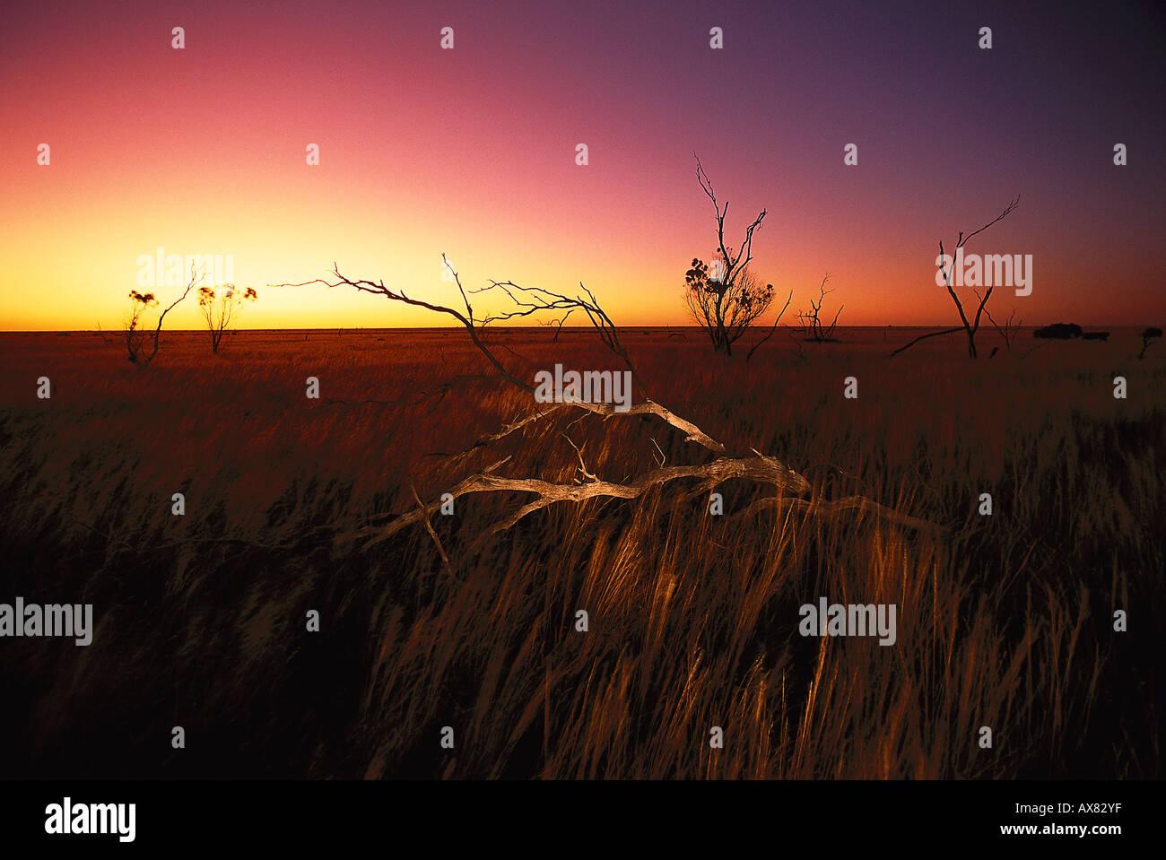 Vaste plaines à Parc National de Nullarbor au coucher du soleil, Madura, Australie Photo Stock