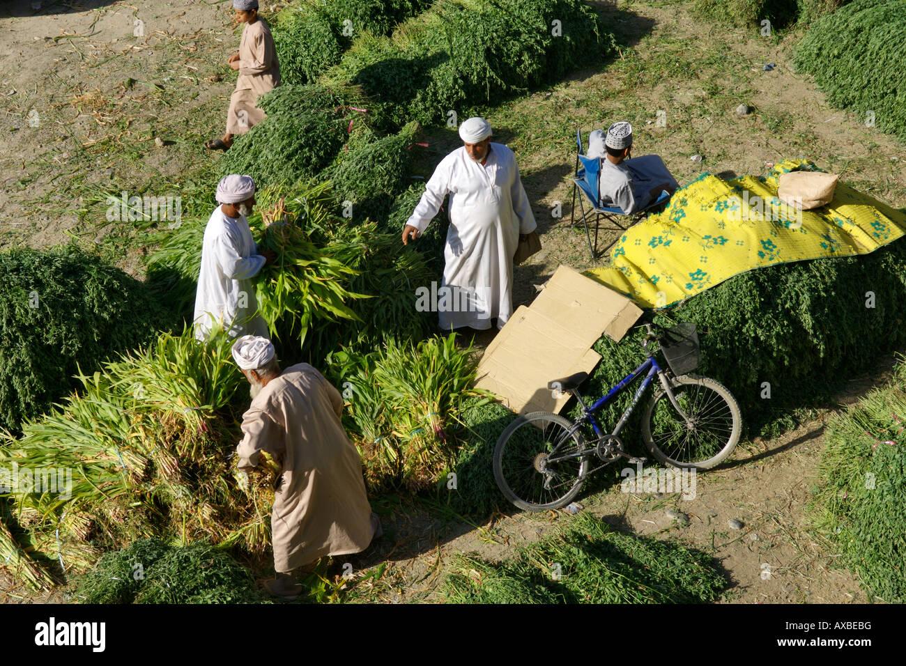 Fourrage pour la vente dans le souk en plein air à Nizwa, dans le Sultanat d'Oman. Photo Stock