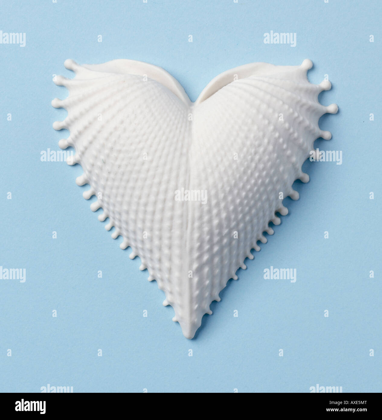 Vertical Coeur Shell Photo Stock