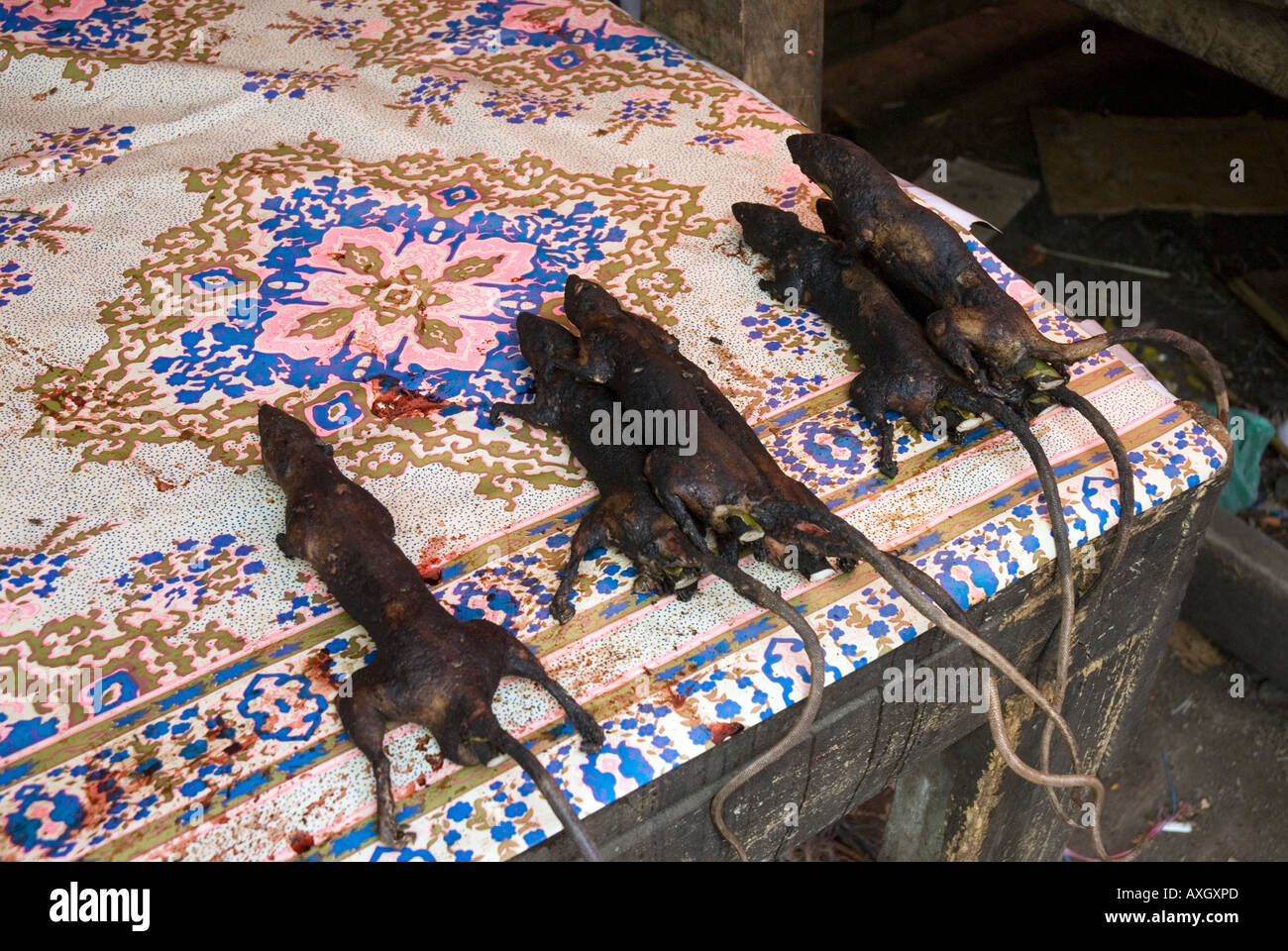 Les rats fumé farci d'lmongrass marché traditionnel Tomohon Highlands Minahasa Utara Sulawesi Indonésie Sulawesi Banque D'Images