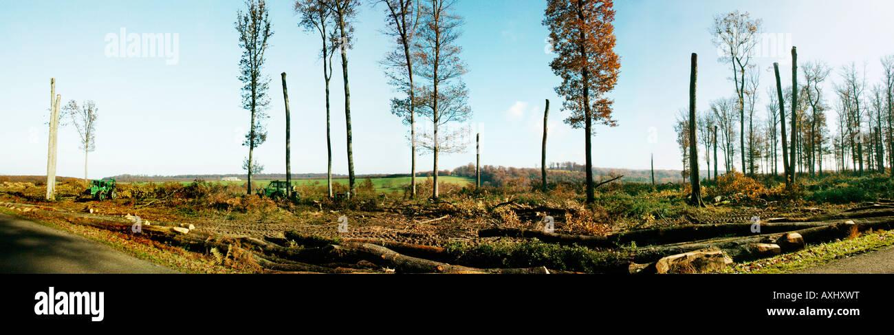 Débit des grumes en forêt de hêtres de Tron ais Allier botanique Fagus fond 03 Allier zone Automne Auvergne hêtre hêtres botanique Com Banque D'Images