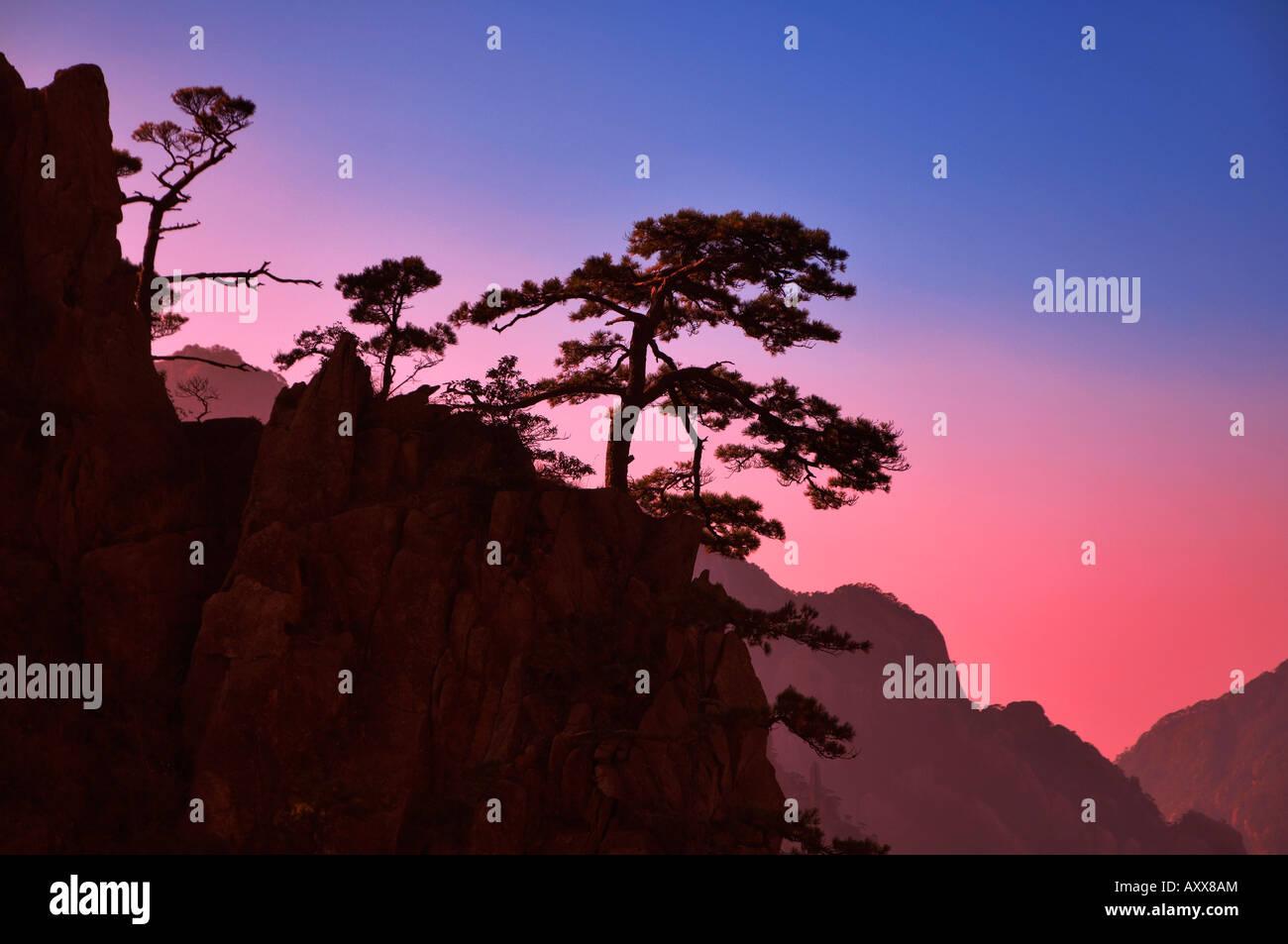 Pins, nuage blanc scenic area, Huang Shan (Mont Huangshan (montagnes jaunes)), la Province de l'Anhui, Chine Photo Stock
