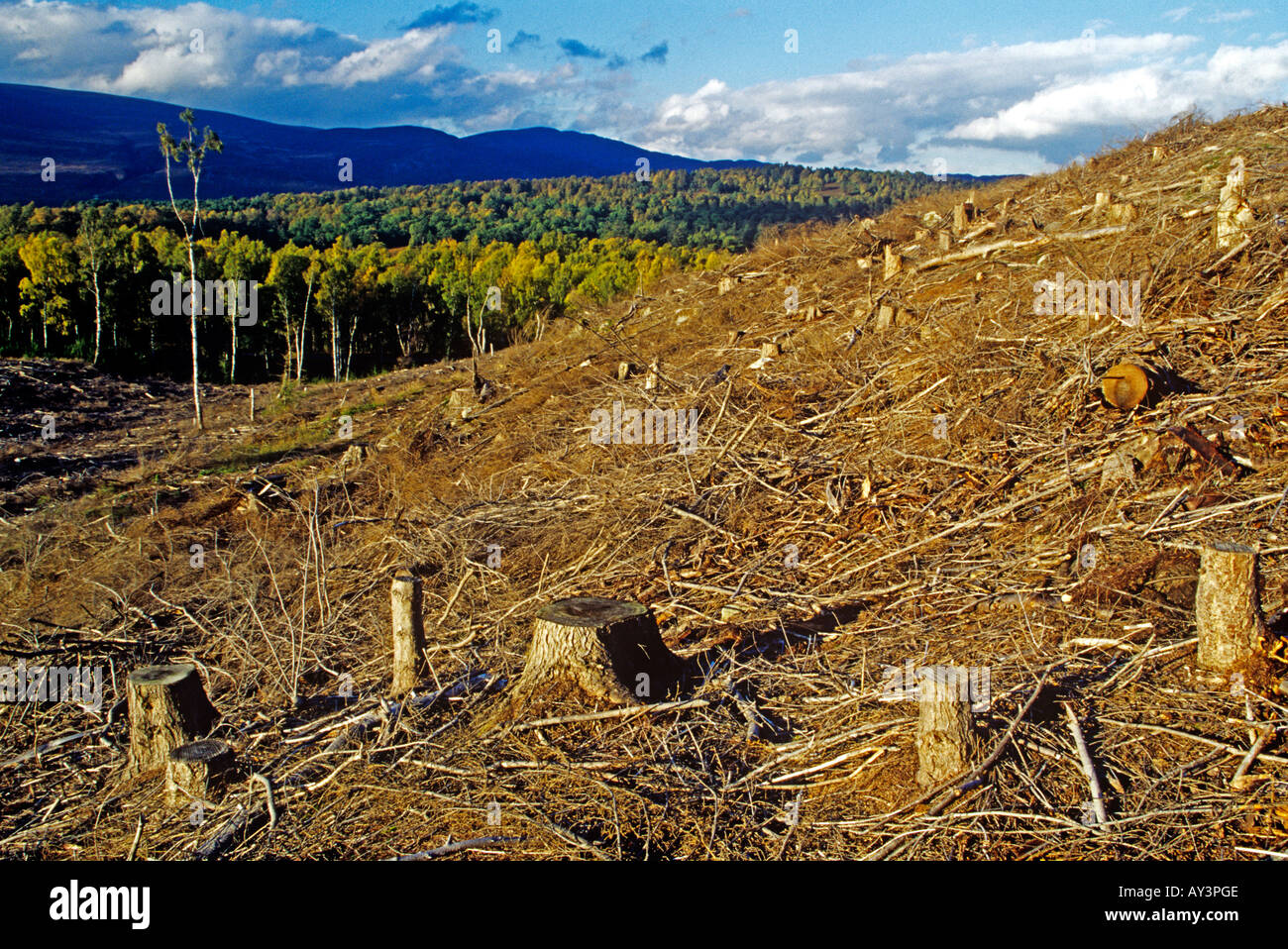 La déforestation sur colline dans les Highlands, Ecosse, Royaume-Uni Photo Stock