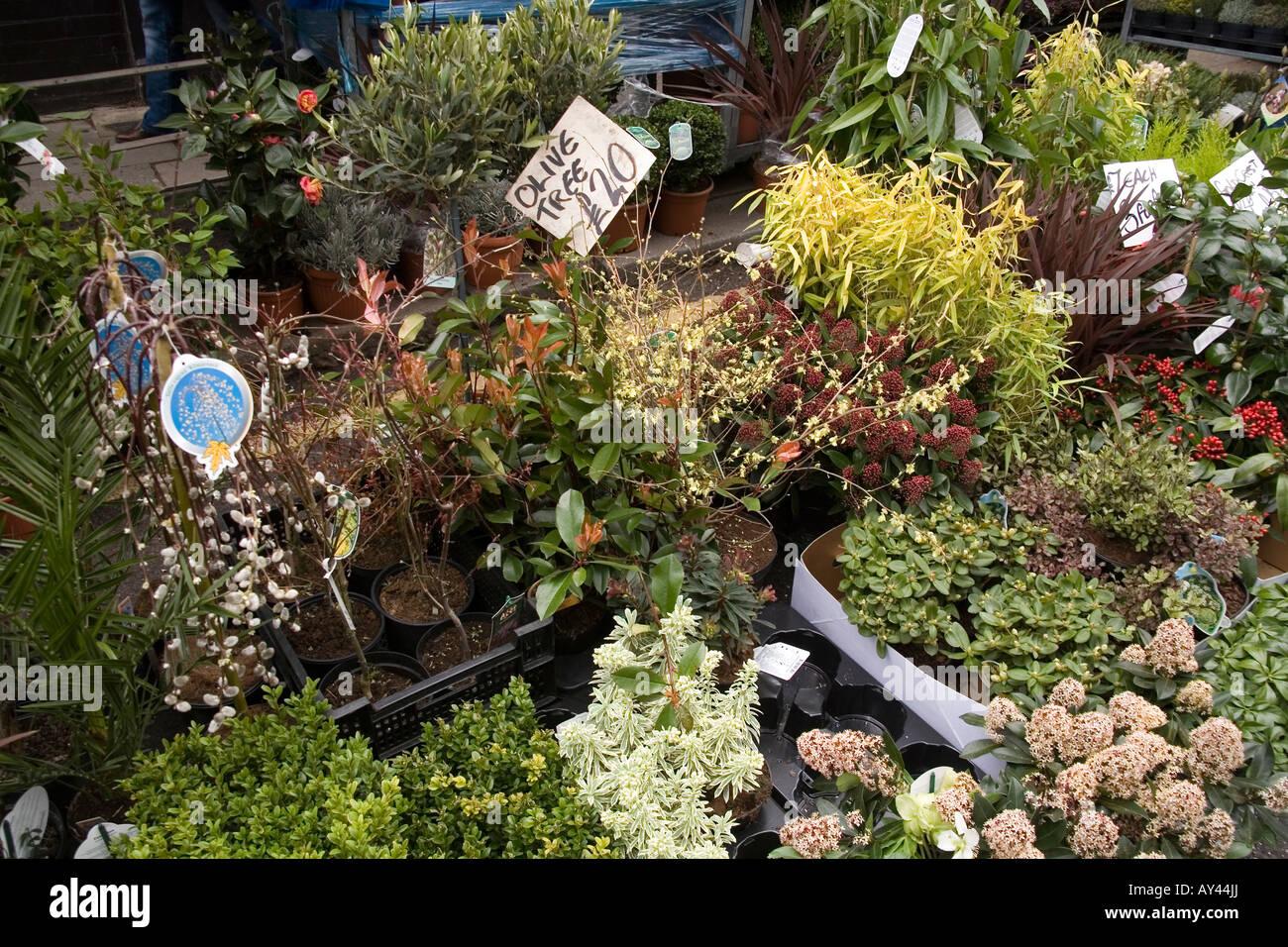 Plantes pour la vente à Columbia Road Flower Market Londres, Angleterre. Photo Stock