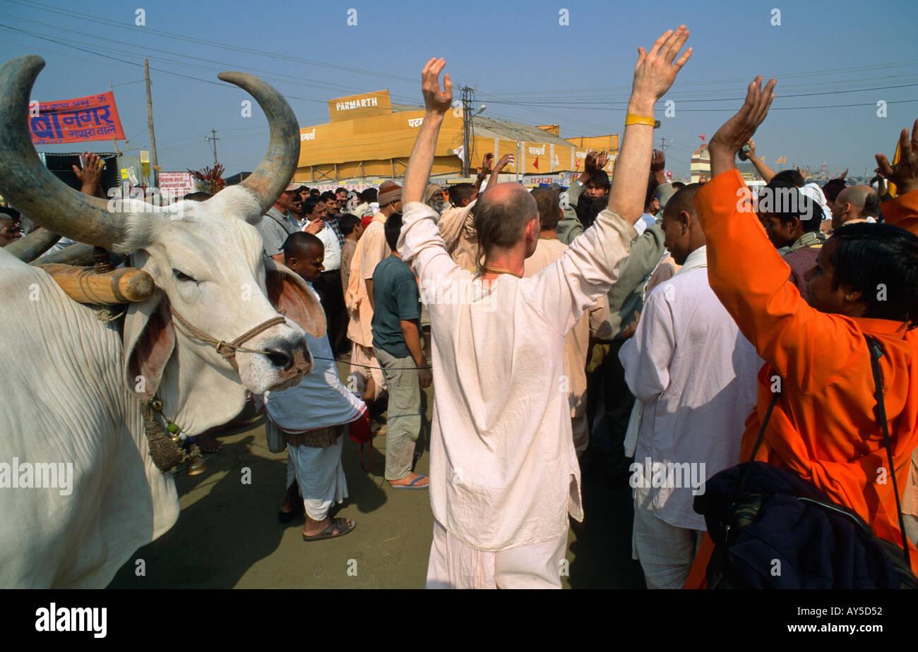 Disciples occidentaux du mouvement Hare Krishna en procession avec un grand boeuf, Maha Kumbh Mela, Allahabad, Uttar Pradesh, Inde Banque D'Images