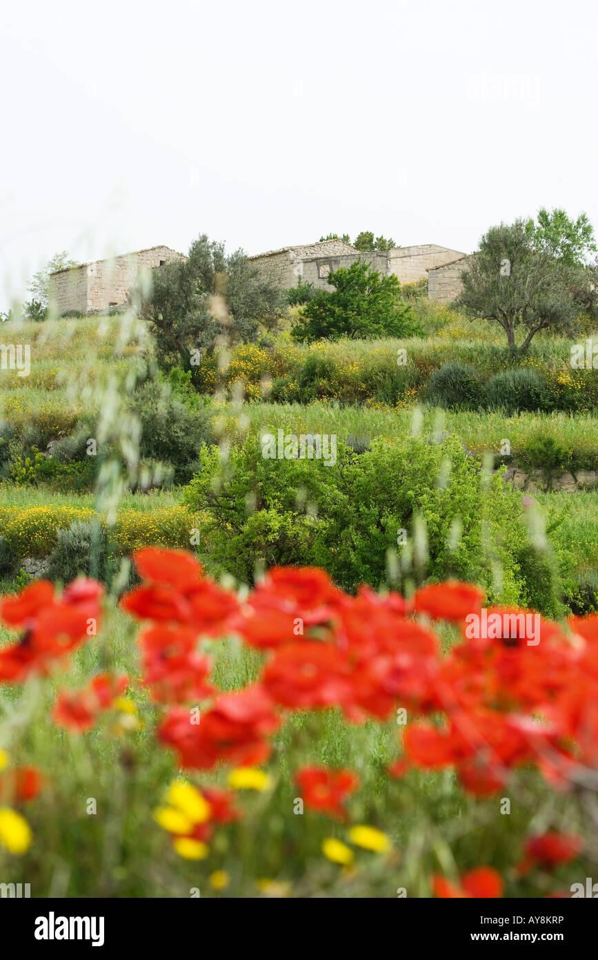 Maisons en pierre, l'aménagement paysager et fleurs sauvages en premier plan Photo Stock