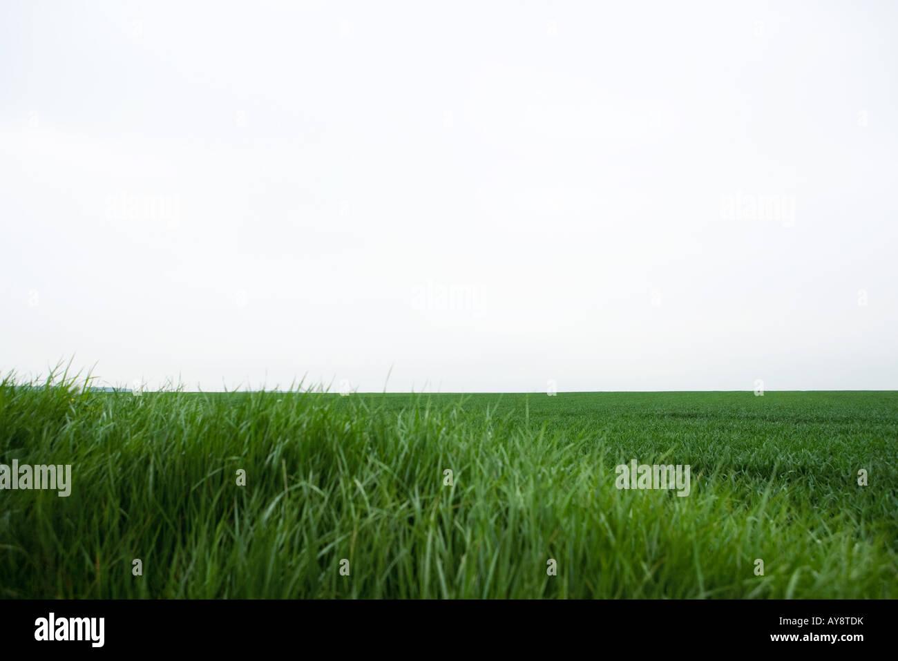 Sur le terrain verdoyant et horizon Photo Stock