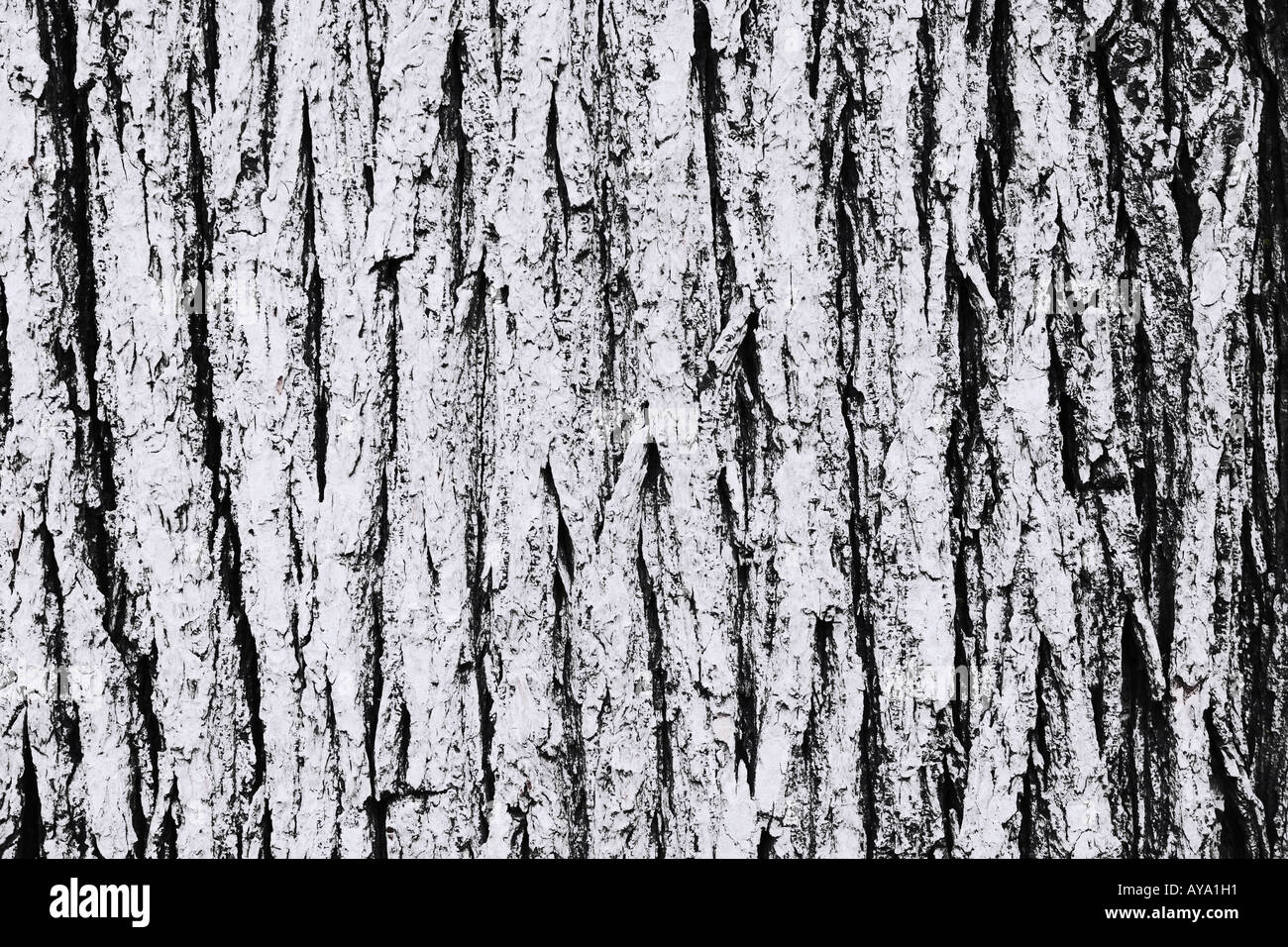 L'écorce des arbres près de Central Park à New York City Photo Stock