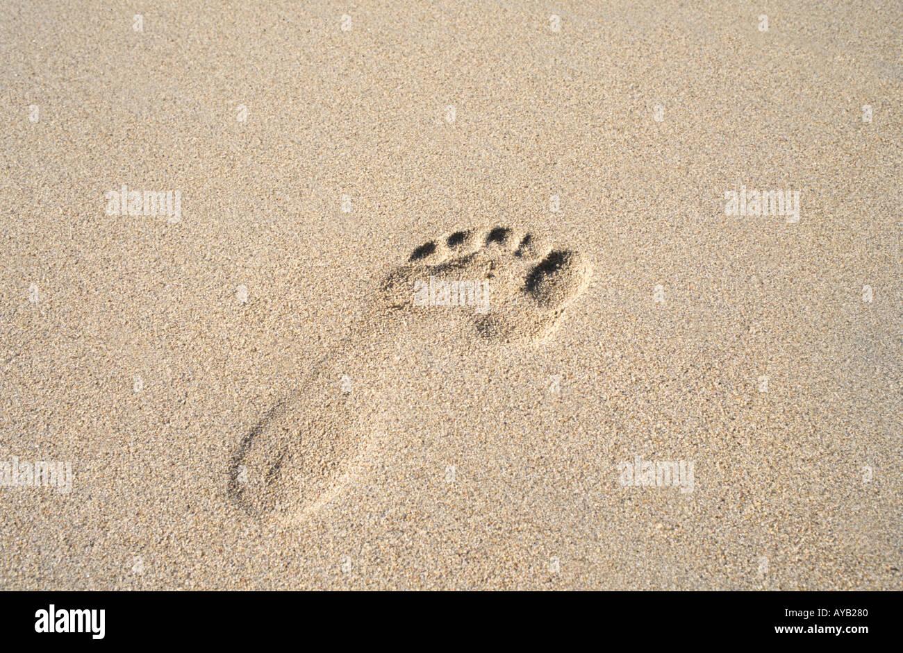 Dans le sable l'empreinte Photo Stock