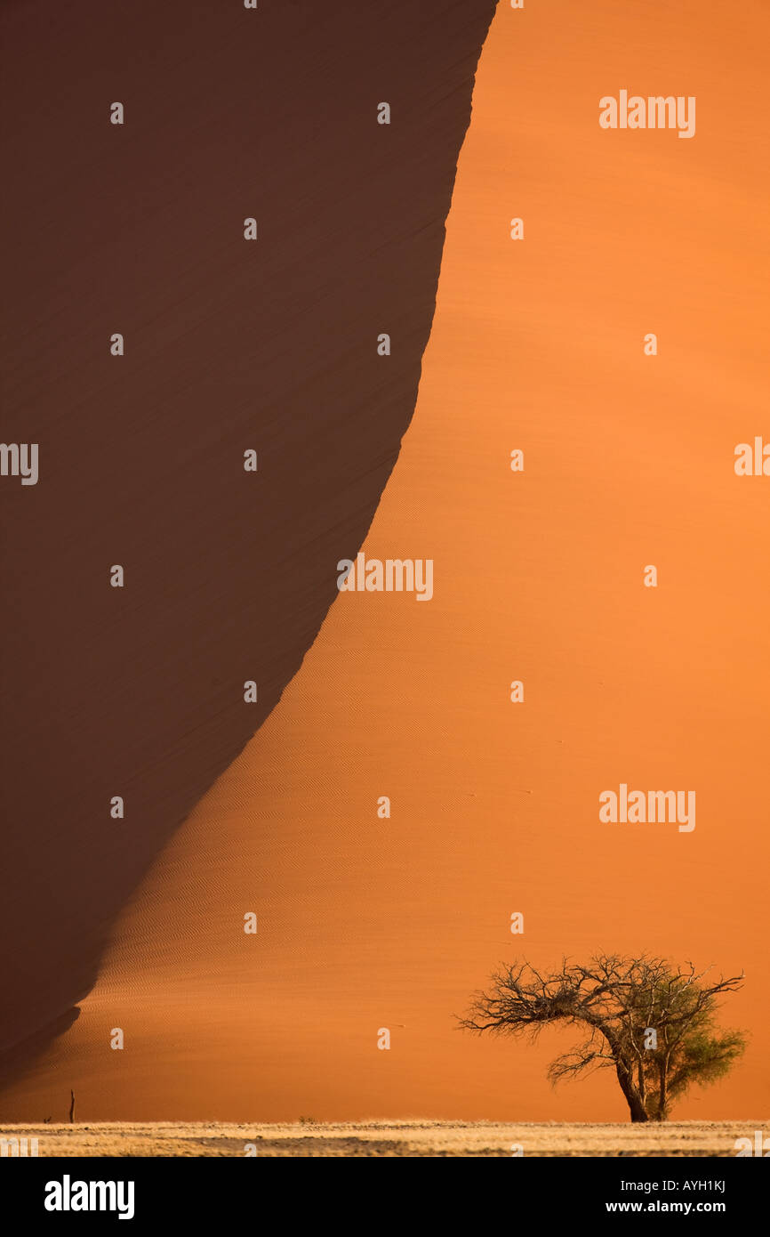 Arbre en face des dunes de sable, Désert du Namib, Namibie, Afrique Photo Stock