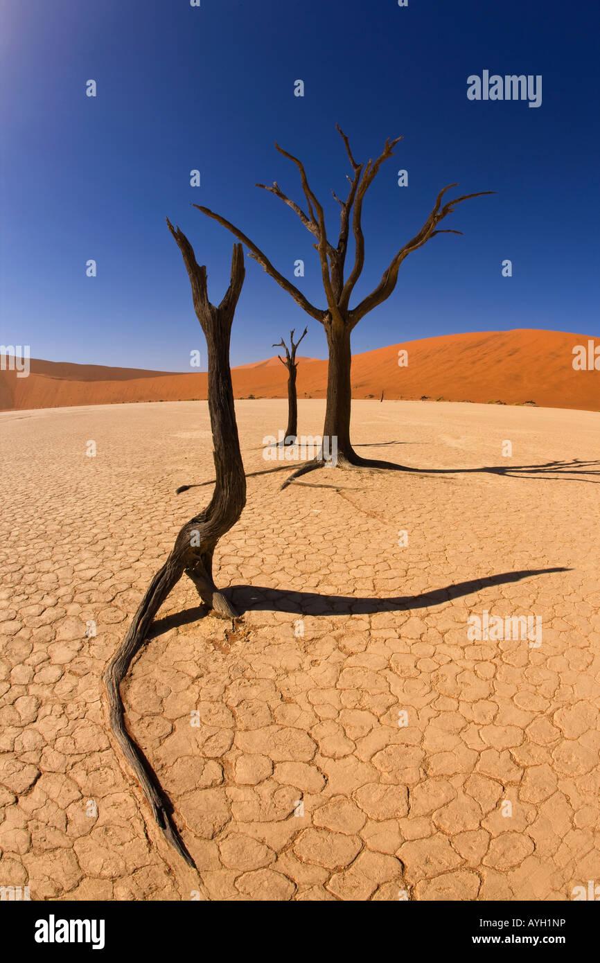 Les arbres morts, Désert du Namib, Namibie, Afrique Photo Stock