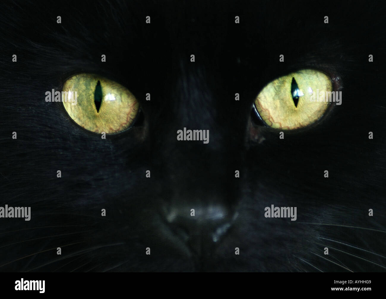 Yeux d'un chat noir Photo Stock