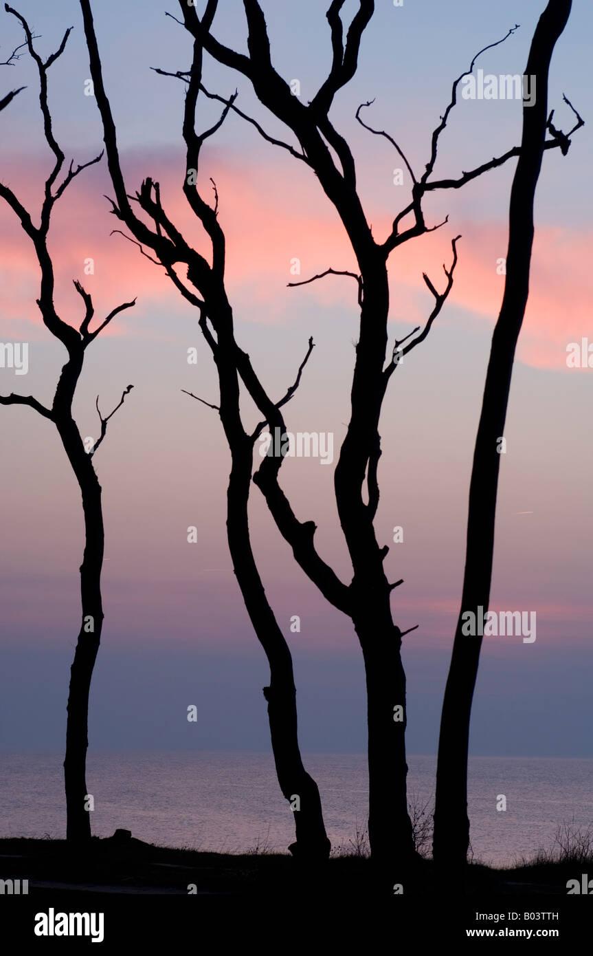 Hêtre avec coucher du soleil dans l', 'Gespensterwald Nienhagen, mer Baltique, Allemagne Banque D'Images
