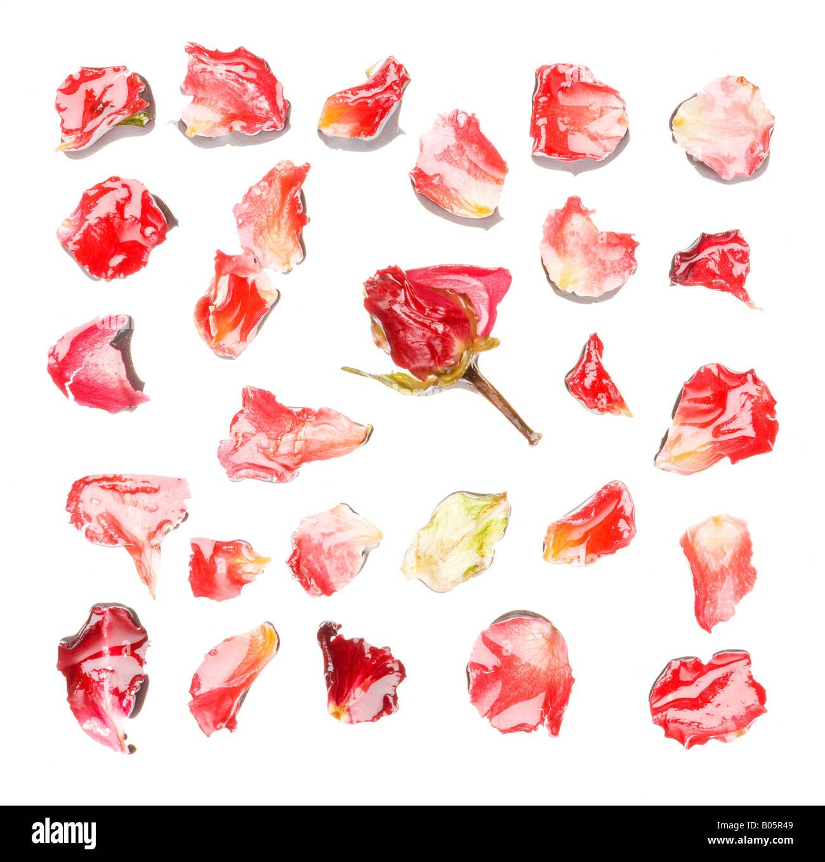 Cadre plein de pétales de rose Photo Stock
