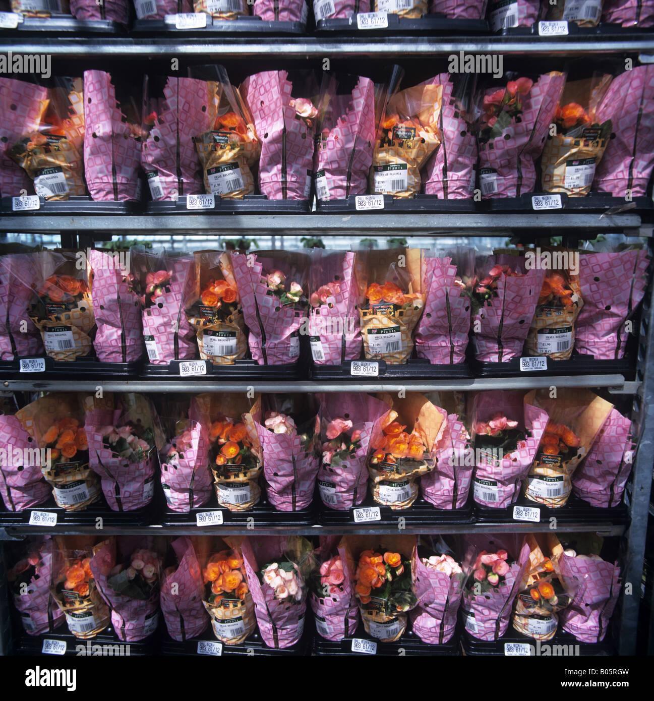 Busy Lizzie emballés individuellement les plantes en pot sur une pépinière chariot pour distribution à un shop Banque D'Images