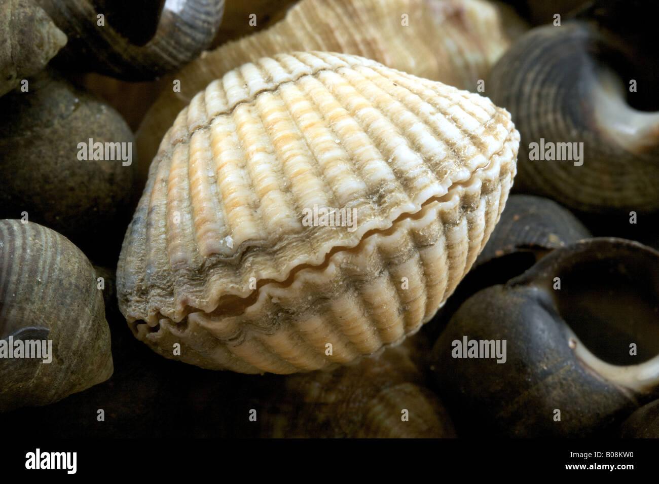 fruits de mer Photo Stock