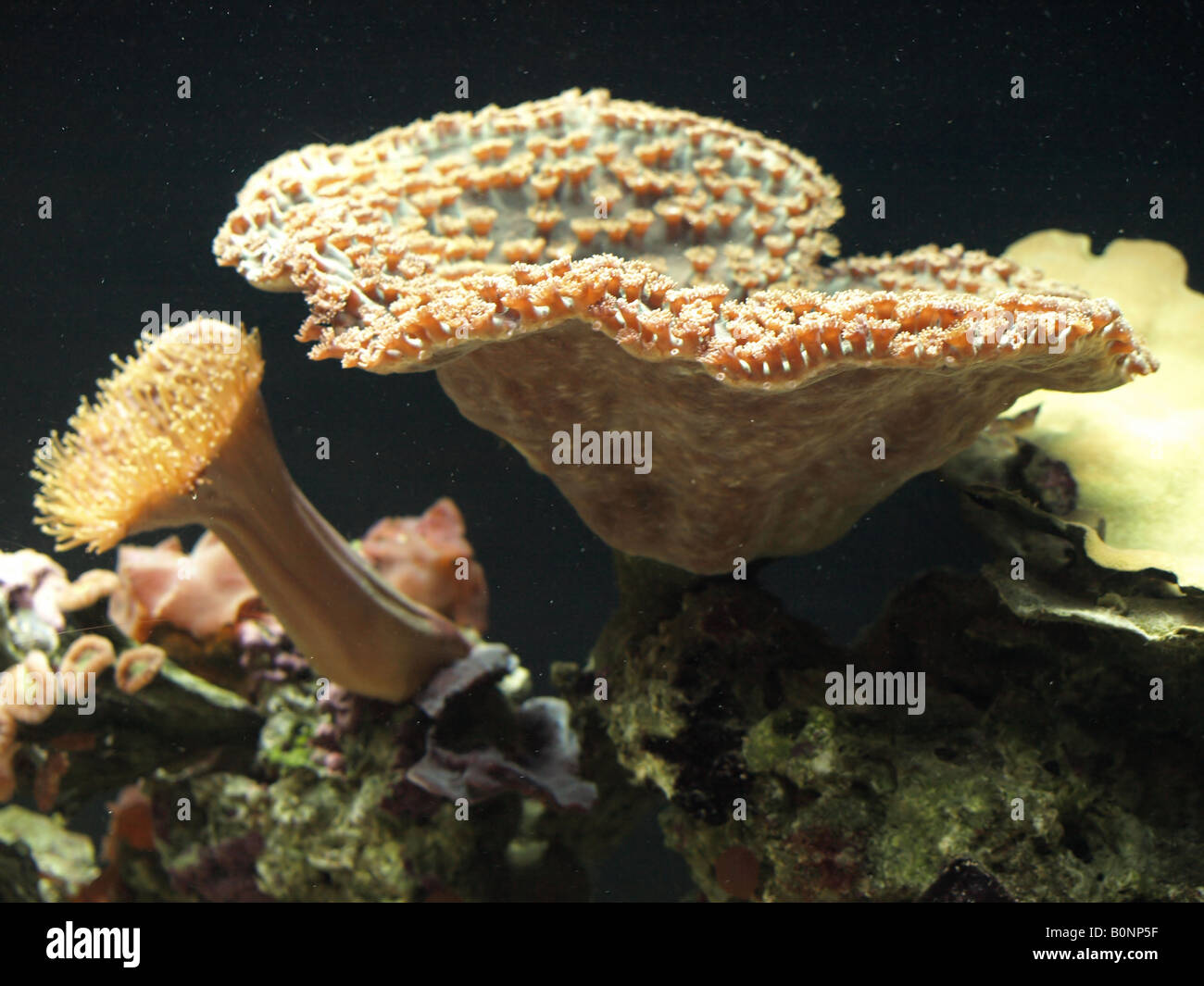 corail vivant Photo Stock