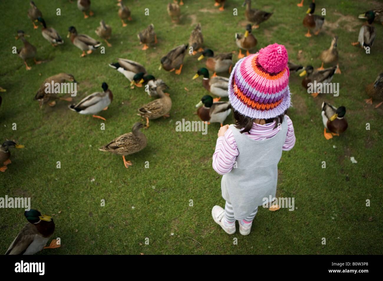 Fille parmi les canards avec woollen bobble hat Photo Stock