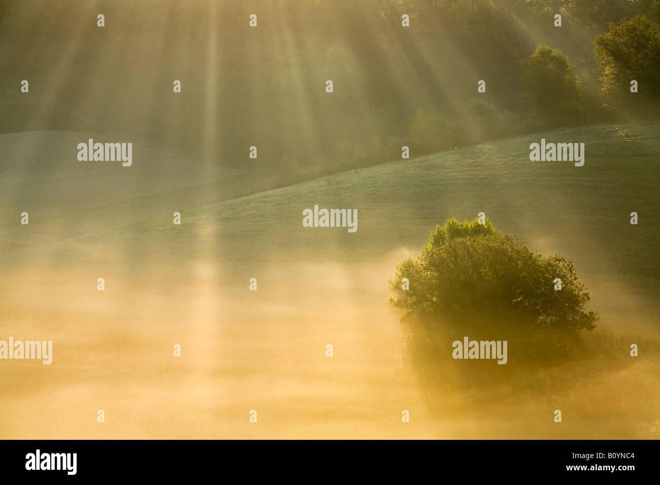 L'Italie, la Toscane, l'arbre dans la brume du matin Photo Stock
