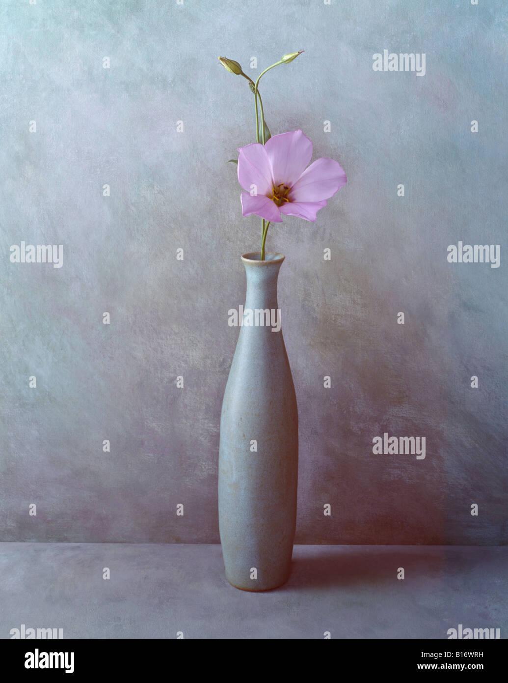 4 d'une série de photos couleur format portrait est celui d'une fleur de lilas sur une toile peinte Photo Stock