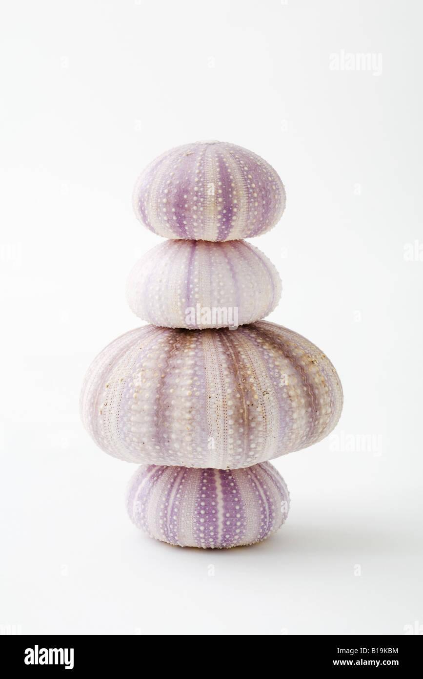 Les coquilles d'oursin de mer séchés, empilées Photo Stock