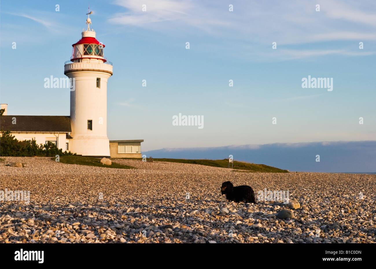 Phare Sletterhage au Danemark et un teckel sur la plage Banque D'Images