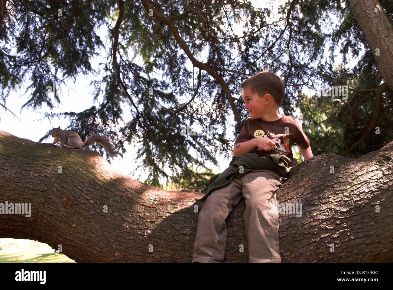 Jack Finch dans un arbre avec un Sqirrel Photo Stock